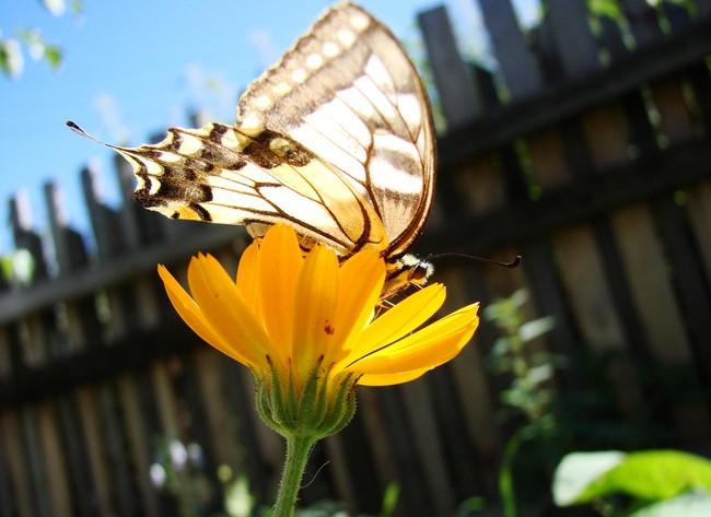 Макросъёмка бабочек