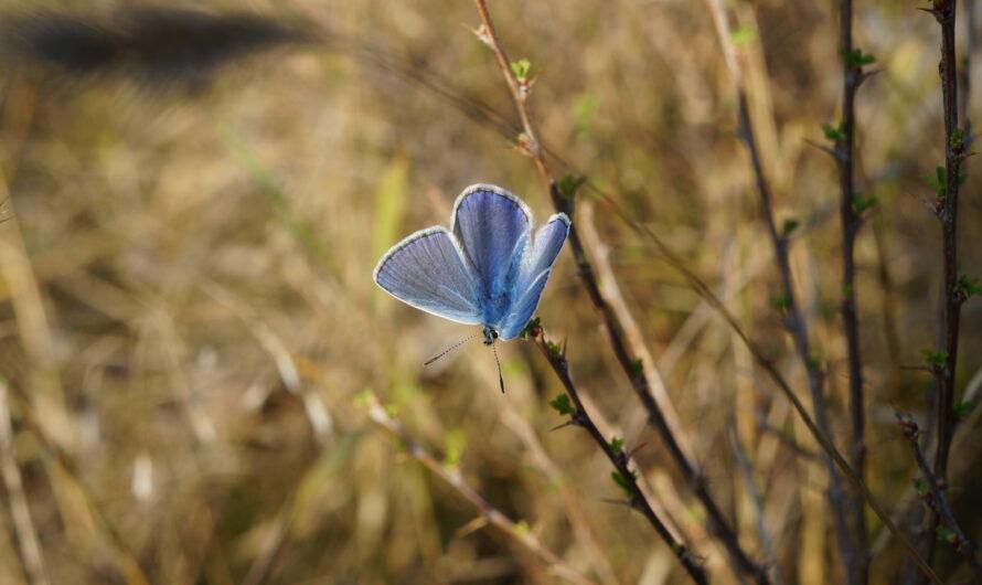 Как приманить бабочек в сад