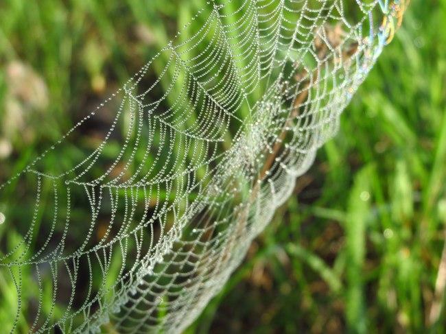 Как фотографировать паутину — 9 советов